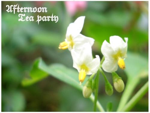 ガーデニング 白い小さな花