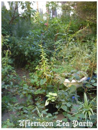 ガーデニング 秋の庭の様子