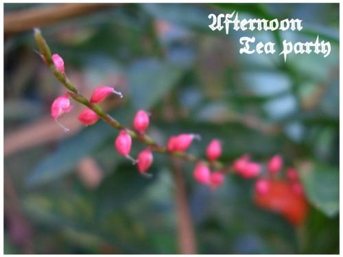 ガーデニング 赤い花 プチプチ