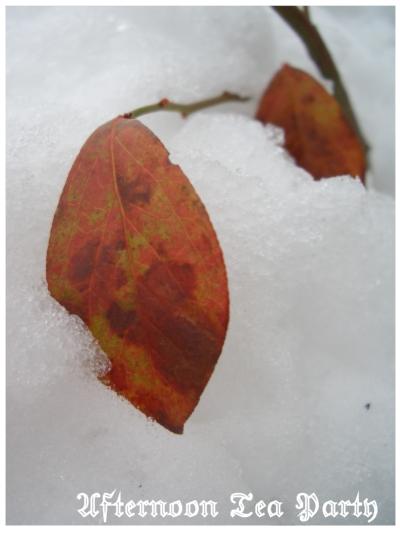 新潟 雪景色 紅葉 二枚