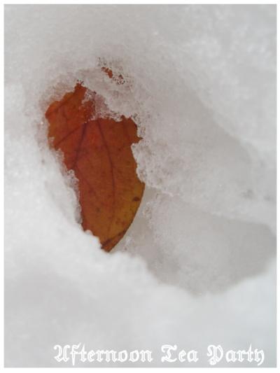 新潟 雪景色 紅葉 一枚