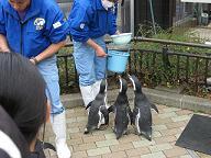 いしかわ動物園・ペンギン