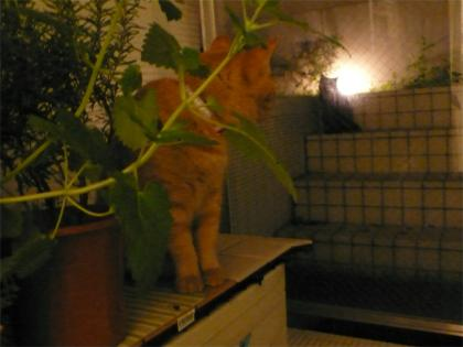 080918cats1.jpg