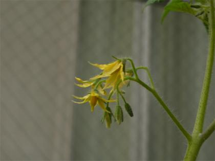 081026flowers.jpg
