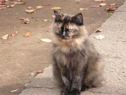 081123cats2.jpg