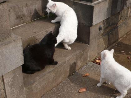 081123cats3.jpg