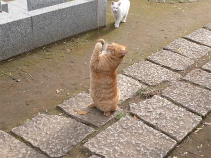 081123cats4.jpg