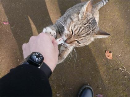 081123cats5.jpg