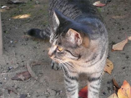 081123cats6.jpg