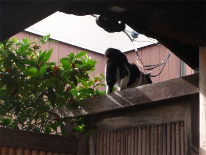 081123cats.jpg