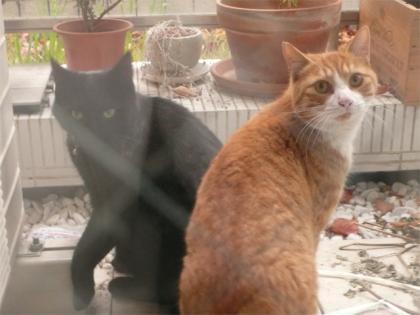 081209cats1.jpg