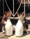 MilknomiNuko.jpg
