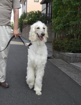 東京・アグリ君散歩2008.08
