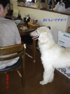 アグリ君ケーキチェック2008.08