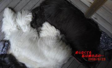 二子玉川ドッグデプト2008-2