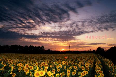 DPP_2546.jpg