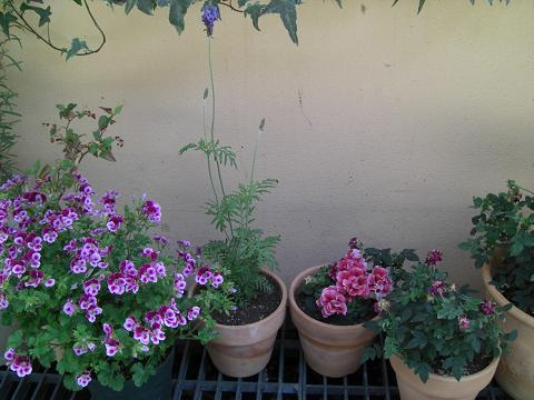 flowergiven.jpg