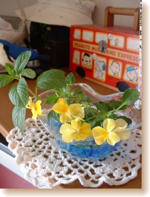 ビオラの花