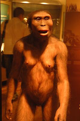 ヒトの祖先 アップ