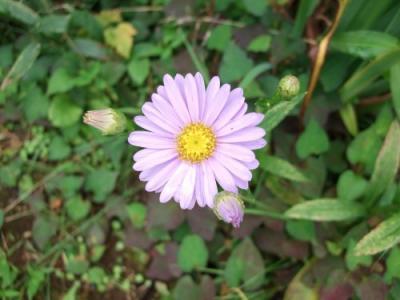 箱根のお花