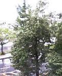 台風18号通過中