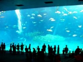 黒潮の海(世界一の大きさの展示面)
