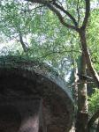 おがたまの木