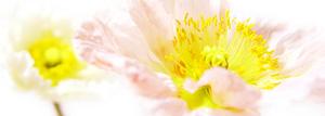 flower32_300x107.jpg