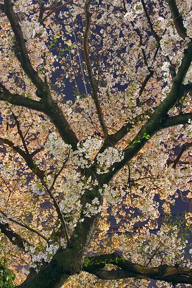 2006-04-03-012C.jpg