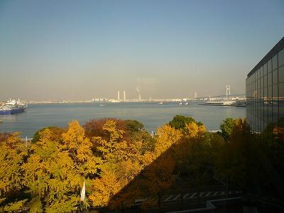 山下公園前の紅葉した銀杏並木2