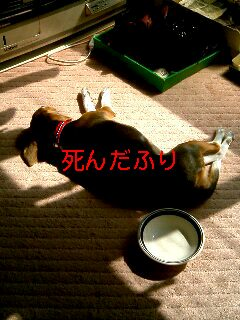 momo_sindafuri.jpg