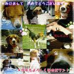 nengajou2006.jpg