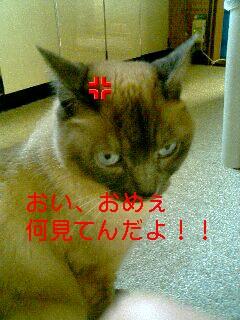 tombo_furyou.jpg