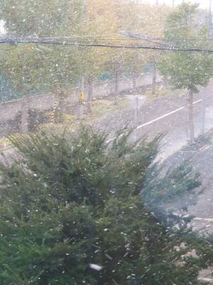 2008年 初雪