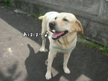 2007-11-04-8.jpg