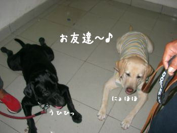 2007-11-04_10.jpg