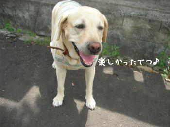 2007-11-04_11.jpg