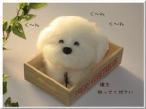 youmou_dog_1-1.jpg