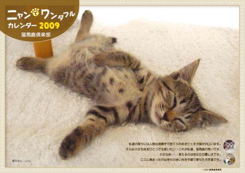nekobaka_hyou2.jpg