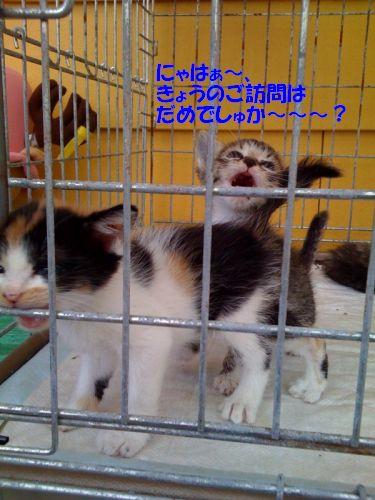photo40_20080922195947.jpg