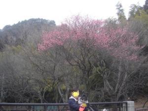 梅が咲いていたょ