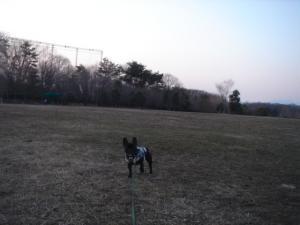 夕暮れ時の長岡公園