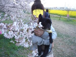 桜と撮りたくてね