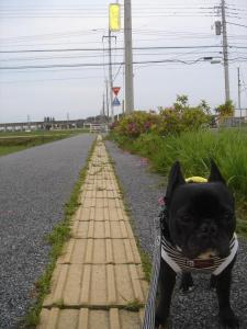 田んぼ沿いをお散歩