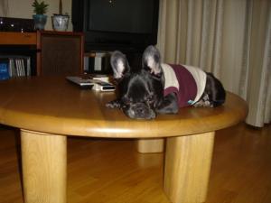 テーブルへ!