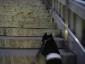 階段でち!