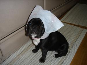 ふぅ頭巾でち