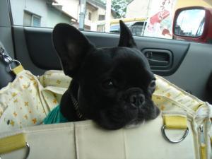 車の中であごのっけ