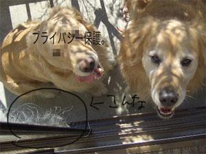 0402CIMG6977.jpg