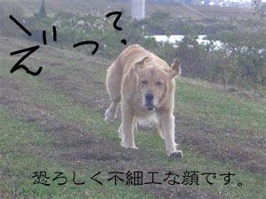 11kawayabuCIMG3882.jpg